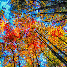 by Walt Mlynko - Nature Up Close Trees & Bushes ( generic event, north america, fall colors, seasons, autumn, event, vermont, named places, where, united states )
