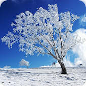 Snow Fall Live Wallpaper