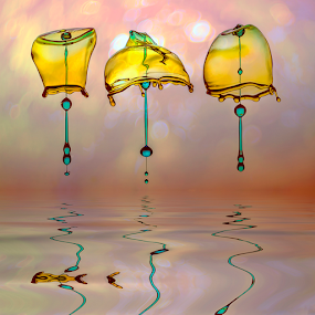 Brotherhood of the Umbrella by Ganjar Rahayu - Abstract Water Drops & Splashes ( highspeed, macro, reflection, waterdrop )