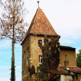 by Micky Mihalache - Buildings & Architecture Public & Historical ( tower, sighisoara, ivy, historical, medieval )