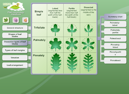 Biology - Plant Morphology- screenshot thumbnail