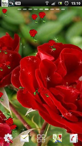 玫瑰现场壁纸