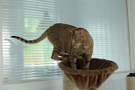 Warley Cross Cattery - All Cat Chalets Have Private Play Areas