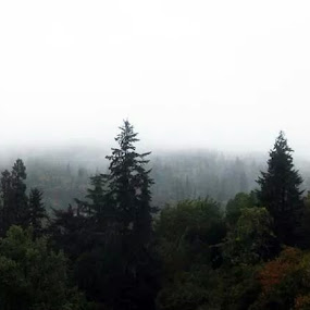 Misty Dawn by Brandon Ferreira - Landscapes Mountains & Hills ( clouds, mountain, tree, autumn, fog, fall, forest, rain, mist )