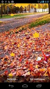 楓葉飄落-動態壁紙|玩個人化App免費|玩APPs