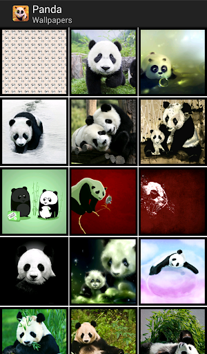 Pandas - HD Wallpapers