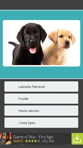 【免費益智App】Qual é o Cachorro?-APP點子