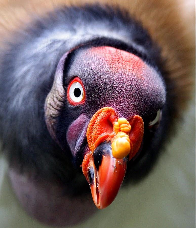 by Chris Allsebrook - Animals Birds