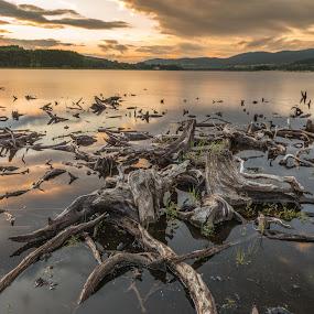 Sunset by Miroslav Havelka - Landscapes Sunsets & Sunrises ( lipno, sunset, bank, landscape, stumps, emotion )