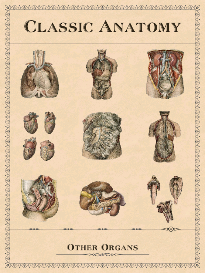 Classic Anatomy- screenshot