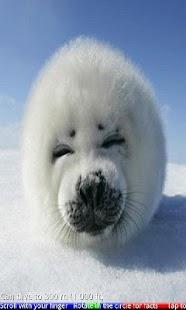 Wild Animals of the Arctic- screenshot thumbnail
