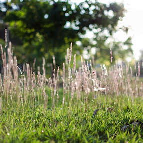 Stroll in park by Adit Lal - Nature Up Close Gardens & Produce ( grass, green, walk, evening )