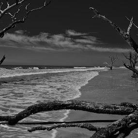 Botany Bay - Boneyard Beach 1 by Jonathan Wheeler - Black & White Landscapes ( sc parks, deadwood, edisto island, beach, boneyard )