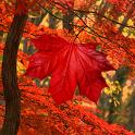 Galaxy S4 Leaf Live Wallpaper icon