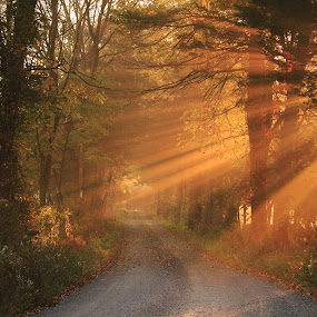 Autumn Light by Aaron Shaver - Landscapes Sunsets & Sunrises ( warm, aunlight, forest, road, morning, landscape, rays, aun, nature, fog, autumn, trail, beams, fall, path, trees, light, mist, , #GARYFONGDRAMATICLIGHT, #WTFBOBDAVIS )