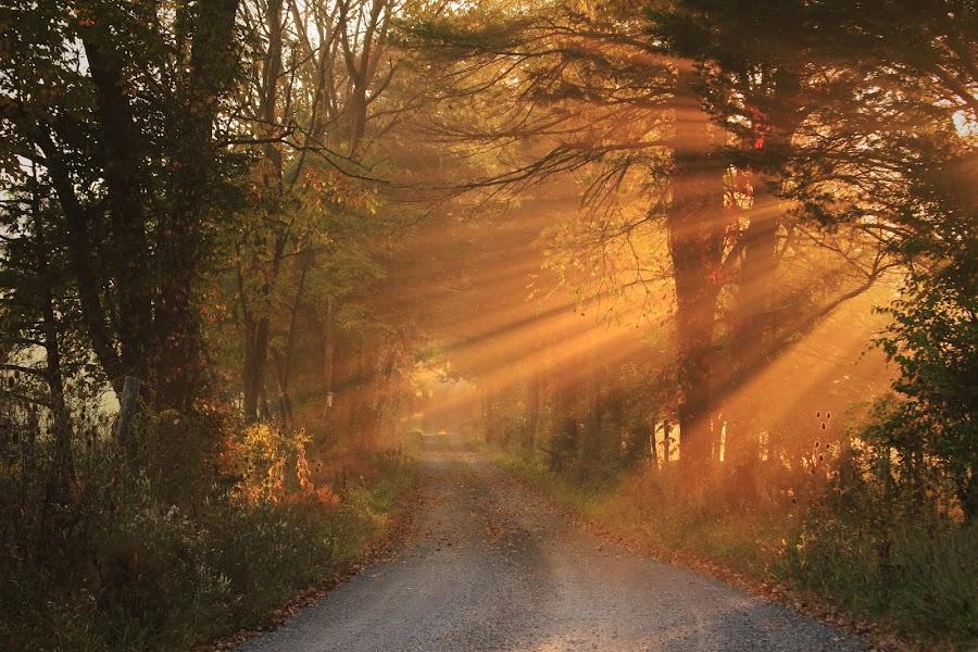 Autumn Light by Aaron Shaver - Landscapes Sunsets & Sunrises ( warm, aunlight, forest, road, morning, landscape, rays, aun, nature, fog, autumn, trail, beams, fall, path, trees, light, mist, , #GARYFONGDRAMATICLIGHT, #WTFBOBDAVIS )