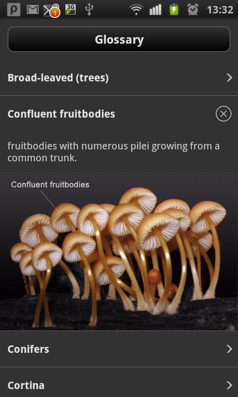 iFungi - screenshot