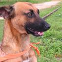 Dog, Badeche