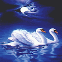 Evening Swans Live Wallpaper