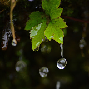 Water drop by Abhishek Ghosh - Abstract Water Drops & Splashes