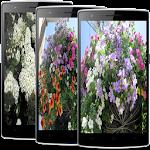 Charming Flowers LiveWallpaper