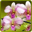 Lovely Orchids Wallpapers icon