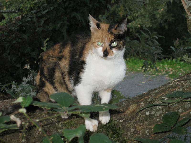 Chat maisons alfort