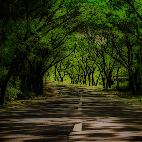 Green tunnel by Blue Bell Bantigue - Nature Up Close Trees & Bushes