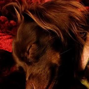 Isn't she beautiful by Amanda Skipworth - Animals - Dogs Portraits (  )