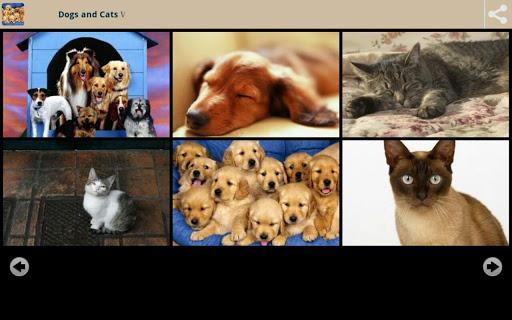 犬と猫の壁紙
