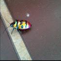 Jewel Bug