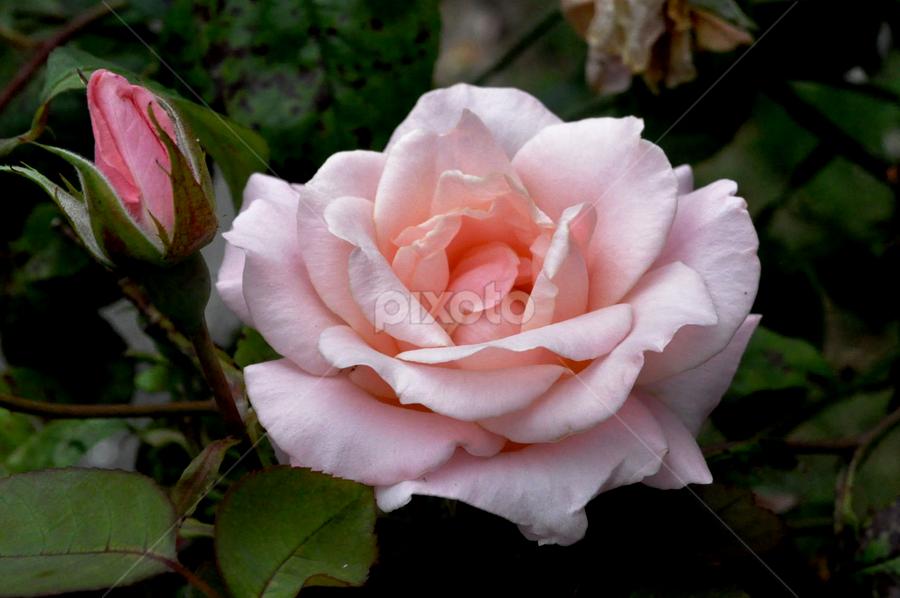 by Steve Smith - Flowers Flower Gardens