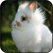 White Rabbit Baby Wallpapers