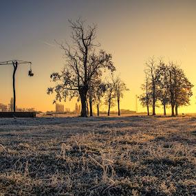 frosty morning  by Fița Ciprian - Landscapes Sunsets & Sunrises