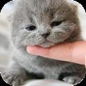 Cute Cat Wallpaper HD icon