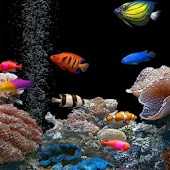 3D Live Fish Wallpaper