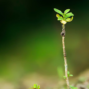 untitled by Rob De Eduardo - Nature Up Close Other Natural Objects ( up close, macro, tree, nature, green )
