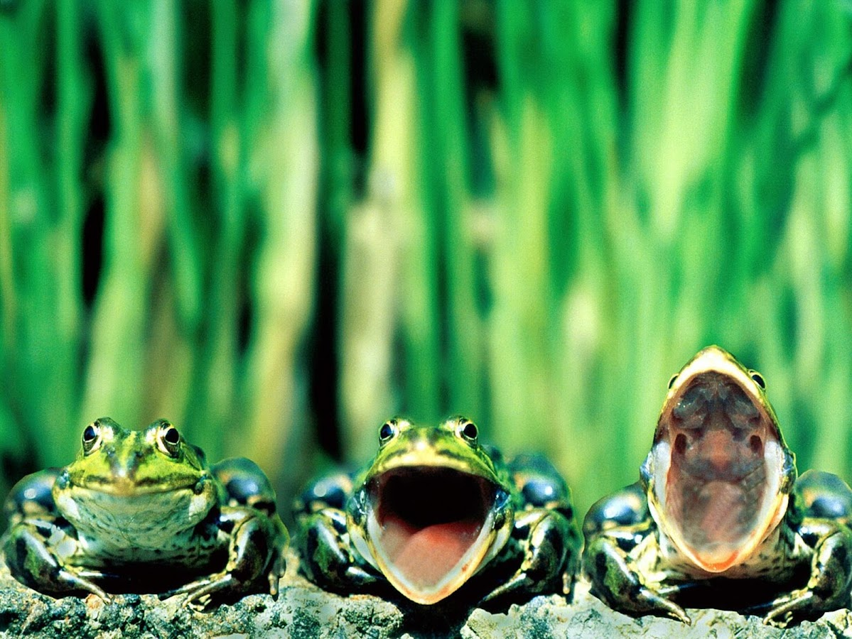 frogs hd wallpapers android apps on google play