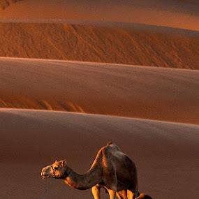 A short break by Adeeb Alani - Animals Other ( @nikon )