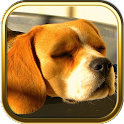 Beagle Dog Puzzle Games icon