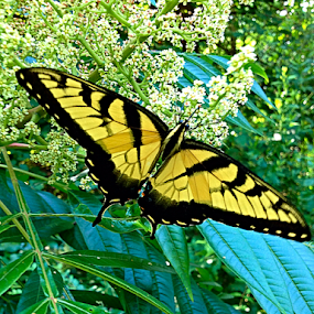 butterfly day by Richard Wright - Instagram & Mobile iPhone ( butterfly, sunday, bug, mississippi,  )