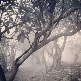 Gothic forest by Alessandra  Romano  - Instagram & Mobile Android ( instagram, winter, gothic, fog, forest, photo )