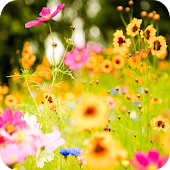 Spring Flowers Wallpaper