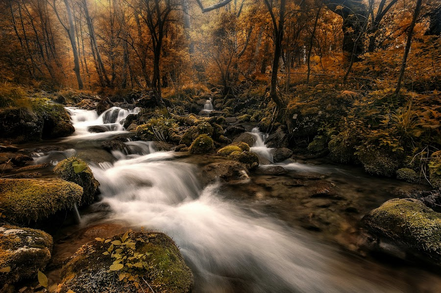 Forest by Grigore Roibu - Landscapes Forests ( bakdrop, stream, mountain, waterfall, stone, rock, travel, spring, adventure, tree, cold, nature, autumn, water, beautiful, forest, seascape, mount, fog, cascade, background, outdoor, adventure aqua attraction autumn backdrop background beautiful beautifull beauty bright cascade cold fog forest landscapes mount mountain natural nature outdoor outlook river scenery seascape sight stone, lanscape, view, aqua, natural, river,  )