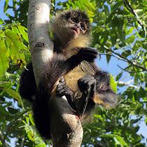 Yucatan Peninsula Biodiversity