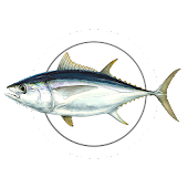 MadeiraFish