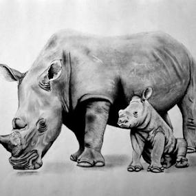 White Rhino&Calf by Paul Murray - Drawing All Drawing ( pencil, calf, rhino, drawing, animal )