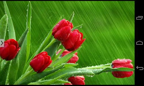Beautiful Flowers Wallpapers screenshot 2