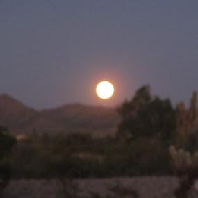 Clear desert night. by Robin Nanni - Landscapes Sunsets & Sunrises
