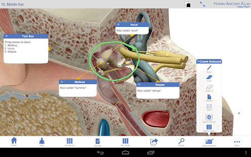 Human Anatomy Atlas - screenshot thumbnail
